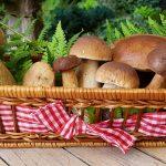 Stoofpotje met champignons en aubergines